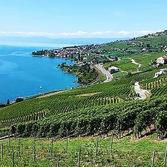 Vorschaubild zu UNESCO-Weinterrassen von Lavaux