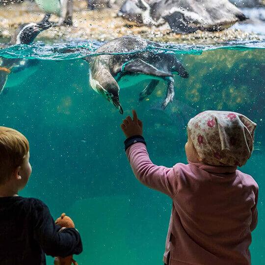 Vorschaubild zu Zoo Zürich
