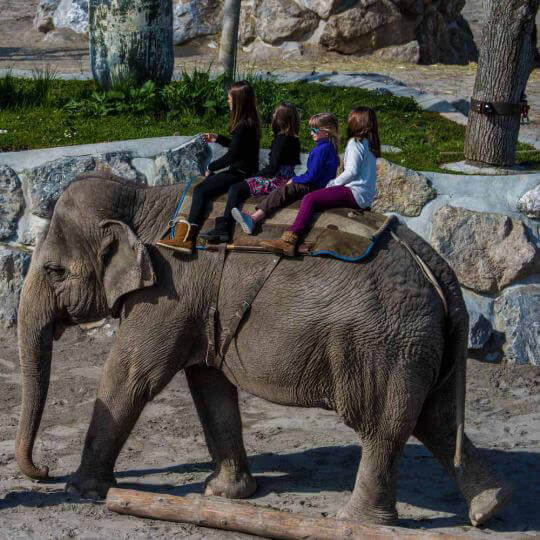 Knies Kinderzoo in Rapperswil 10