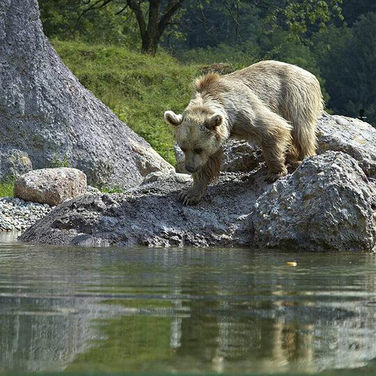 Vorschaubild zu Natur- und Tierpark Goldau