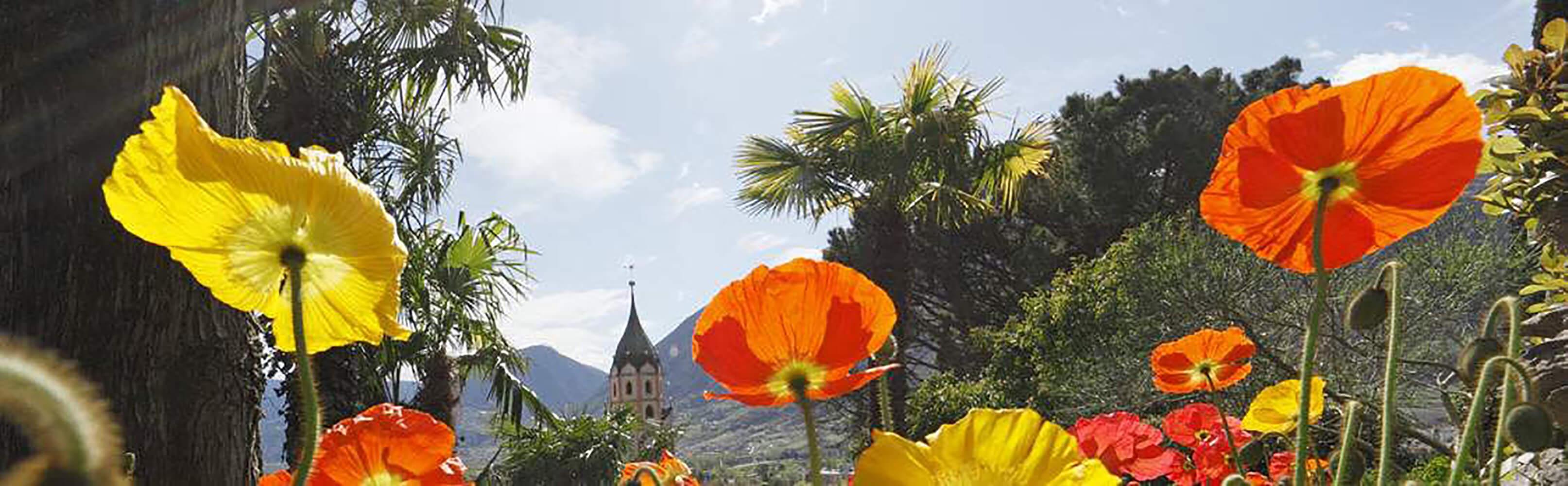 Meran - bekannter Kurort in Südtirol 1
