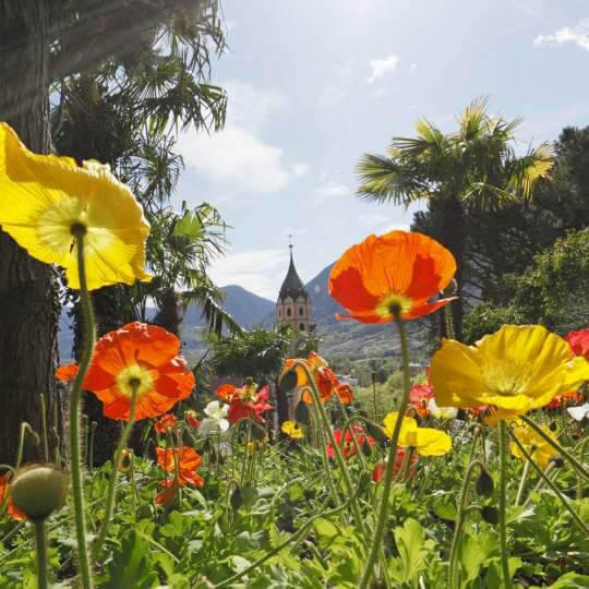 Meran - bekannter Kurort in Südtirol 10