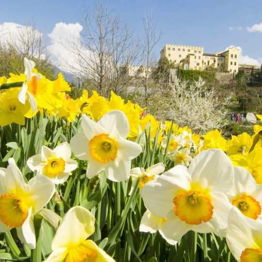 Die Gärten von Schloss Trauttmansdorff inMeran 10