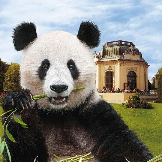 Vorschaubild zu Tiergarten Schönbrunn Wien