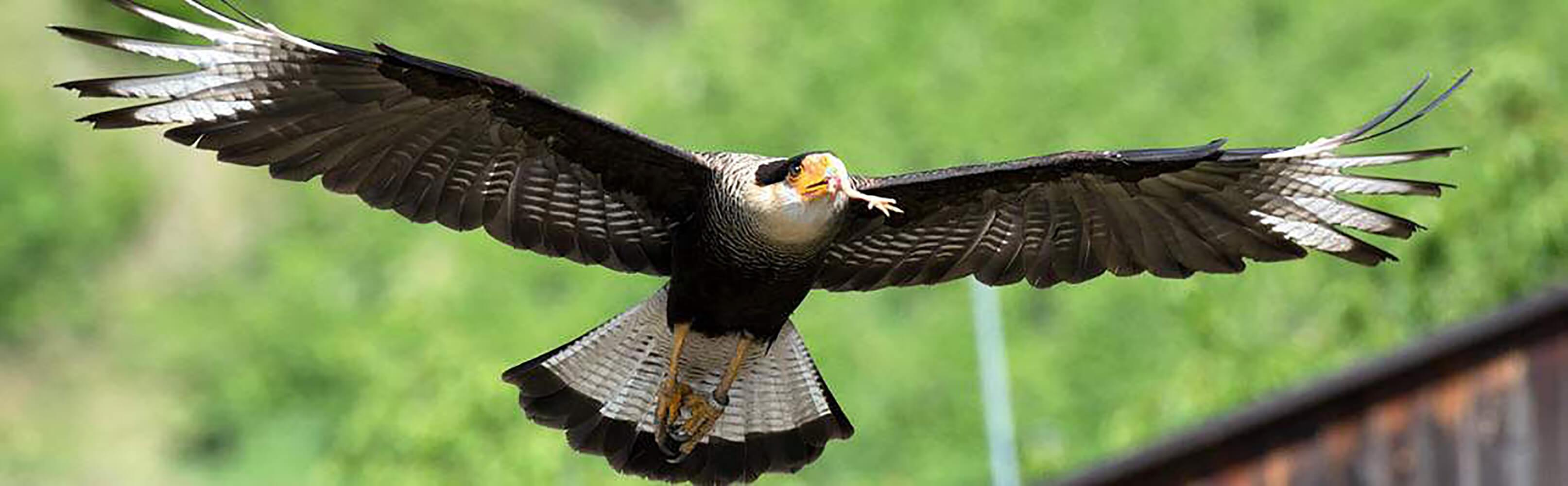 Gufyland - Pflegezentrum für Vogelfauna Schloss Tirol 1