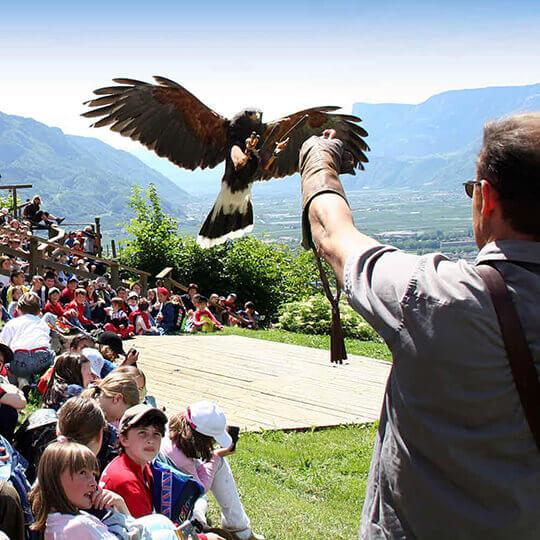 Vorschaubild zu Gufyland - Pflegezentrum für Vogelfauna Schloss Tirol