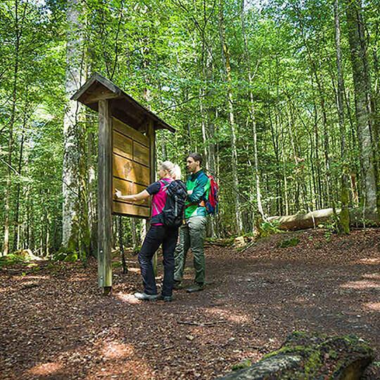Vorschaubild zu Nationalpark Bayerischer Wald