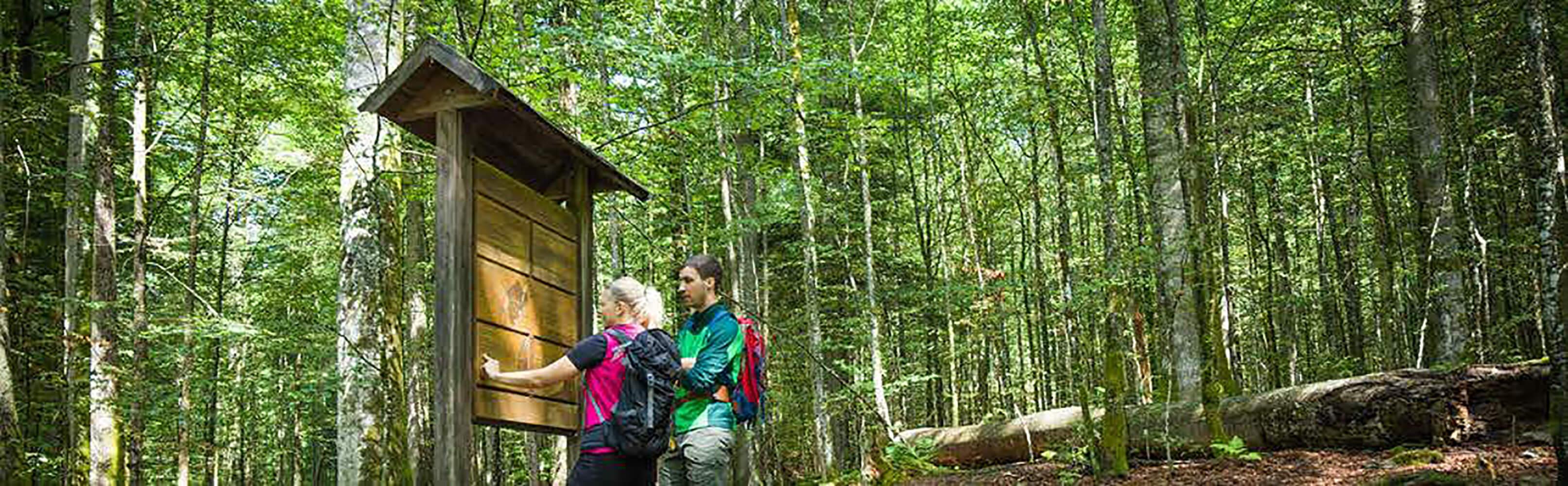 Nationalpark Bayerischer Wald 1