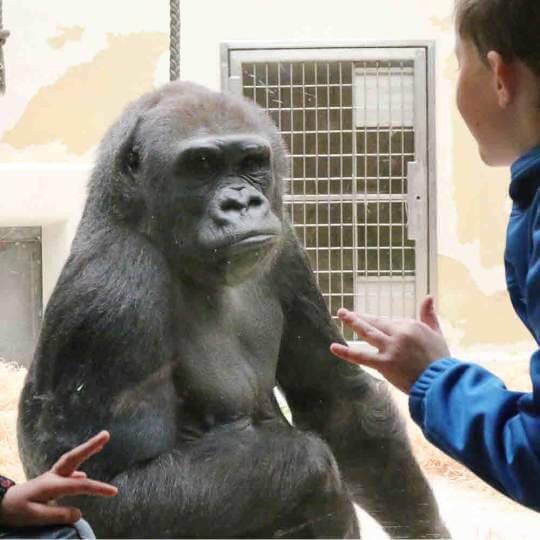 Der Tiergarten Nürnberg lockt kleine und grosse Zoologen 10