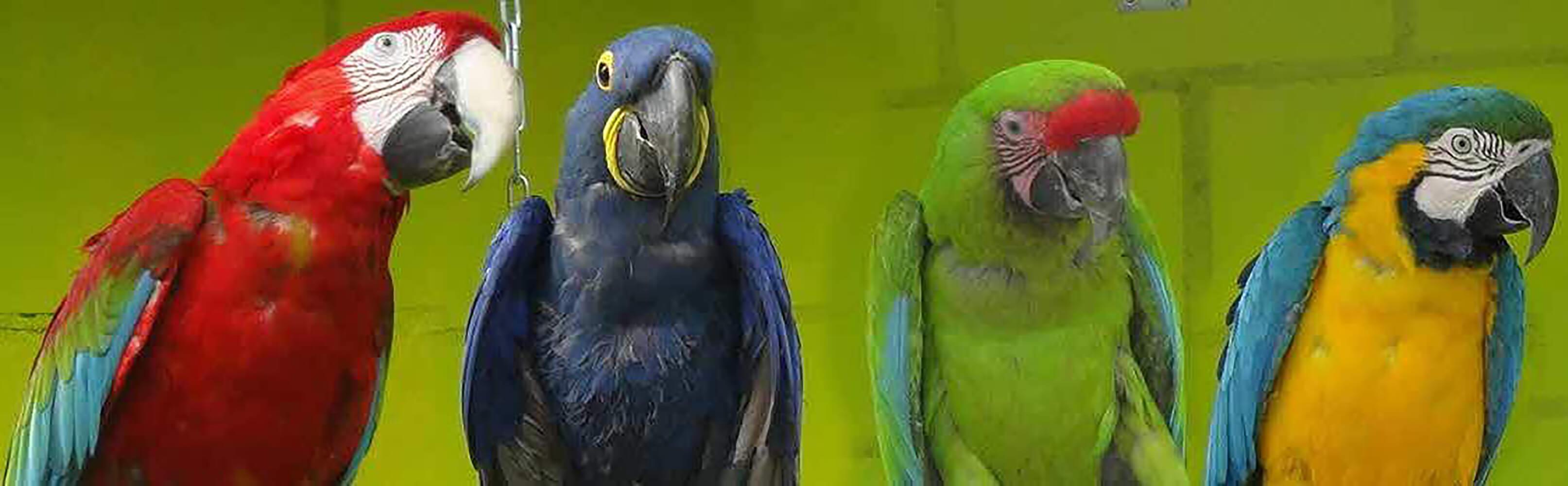 Vogelpark Ambigua 1