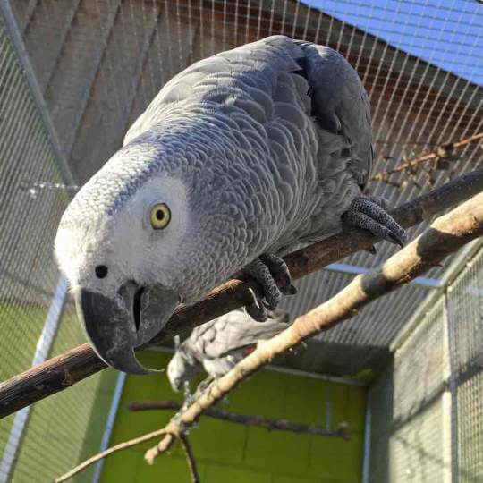 Vogelpark Ambigua 10