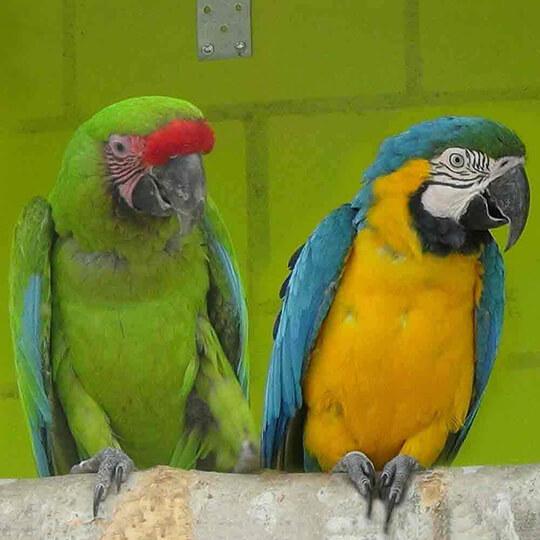 Vorschaubild zu Vogelpark Ambigua