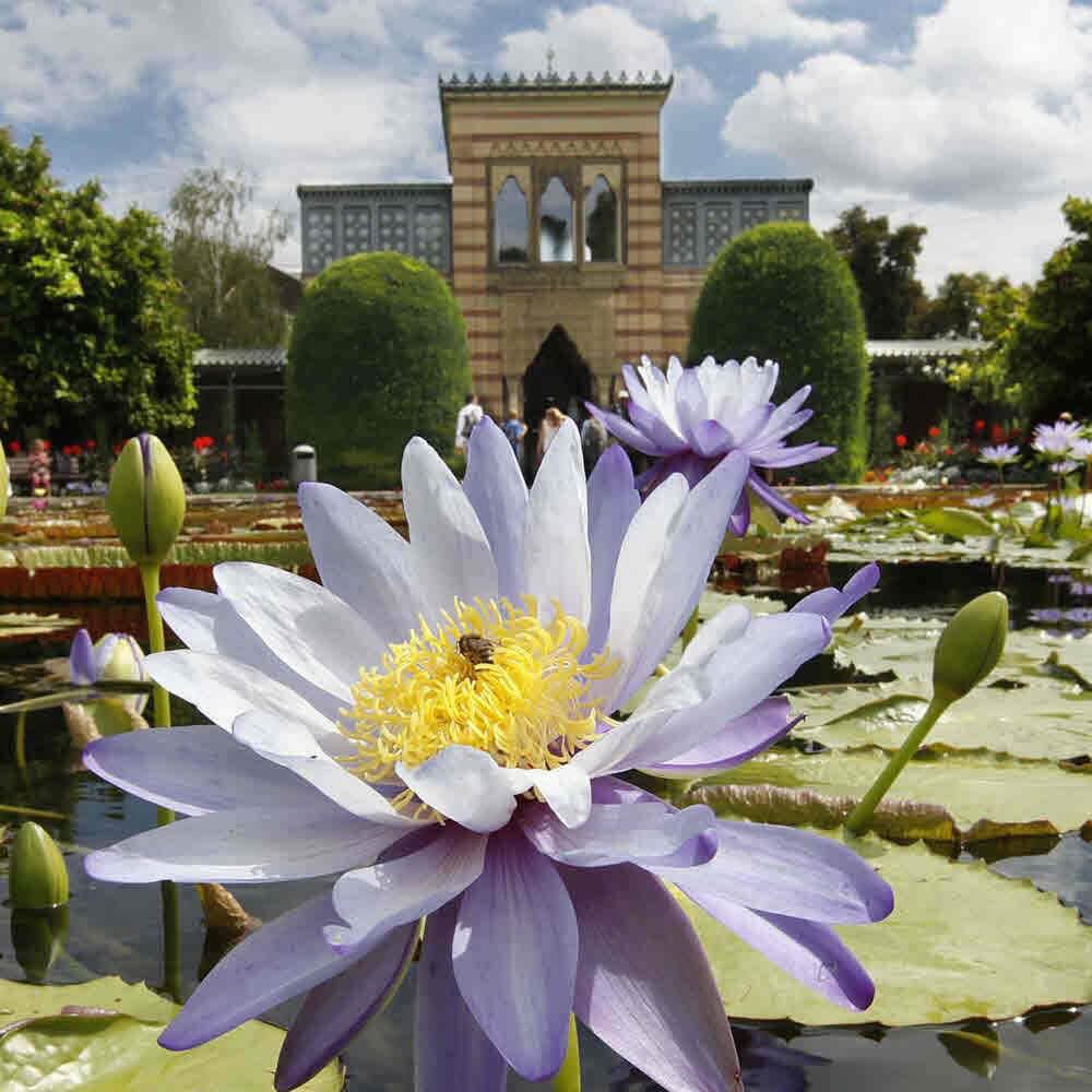 Die Wilhelma - zoologischer und botanischer Garten Stuttgart