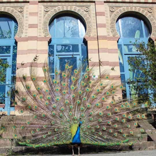 Die Wilhelma - zoologischer und botanischer Garten Stuttgart 10