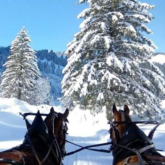 Vorschaubild zu Pferdeschlittenfahrt zum Lauenensee
