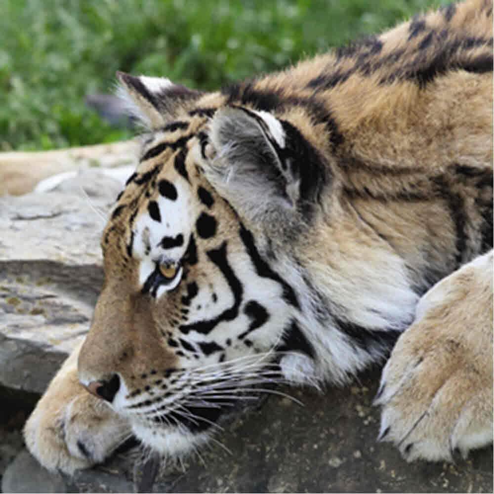Abenteuerland Walter Zoo Gossau