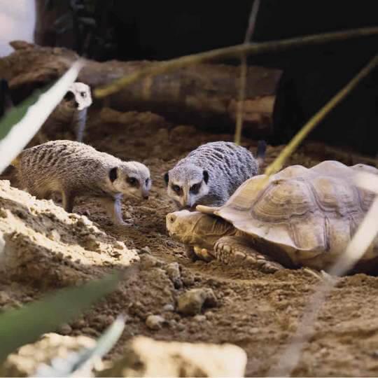 Walter Zoo Gossau 10