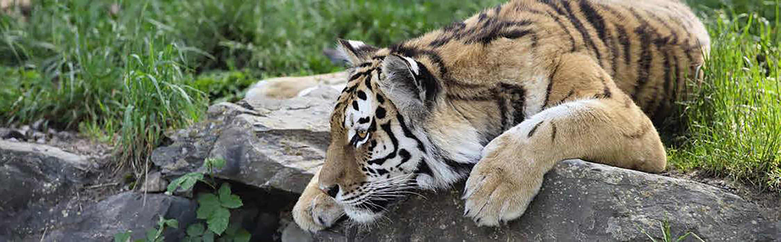 Abenteuerland Walter Zoo Gossau 1