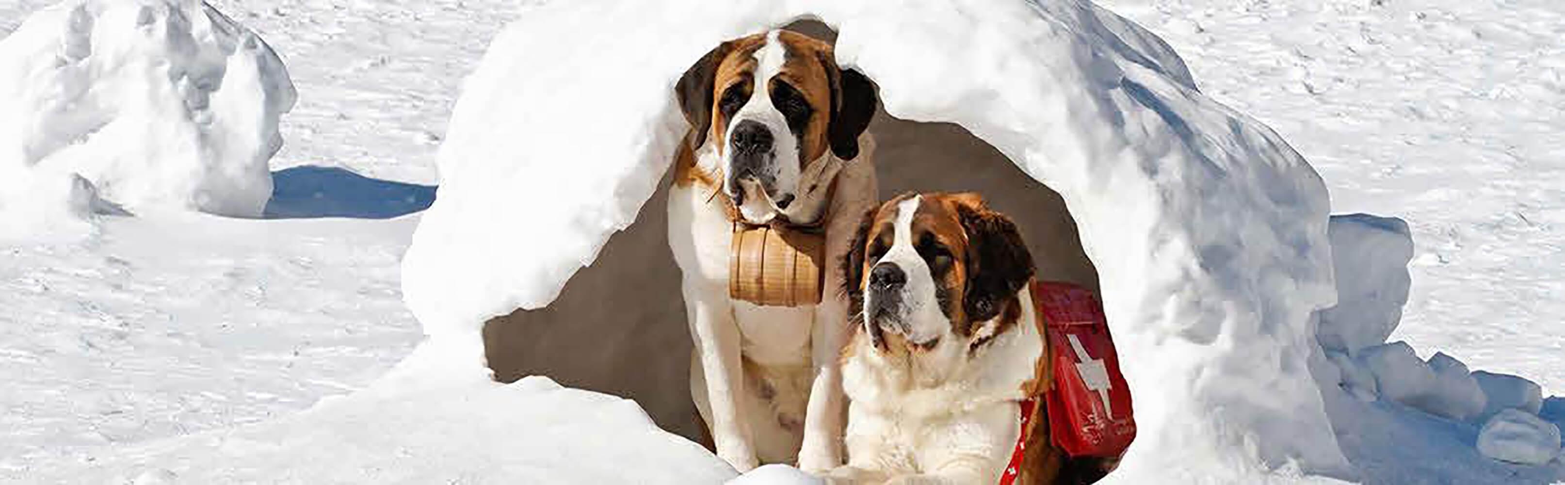 Winterwanderung mit Barry, dem Schweizer Nationalhund 1