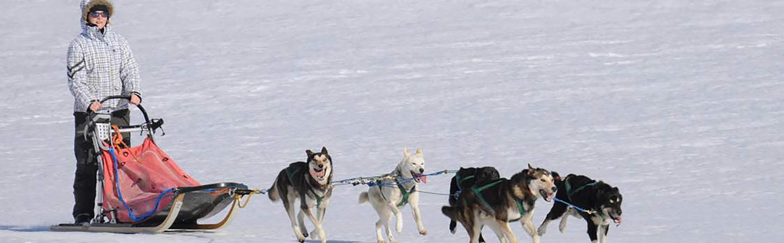 Huskystaff - Schlittenhunde Touren in der Ostschweiz/GR 1