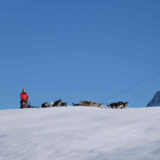 Huskystuff - Schlittenhunde Touren in der Ostschweiz/GR 10