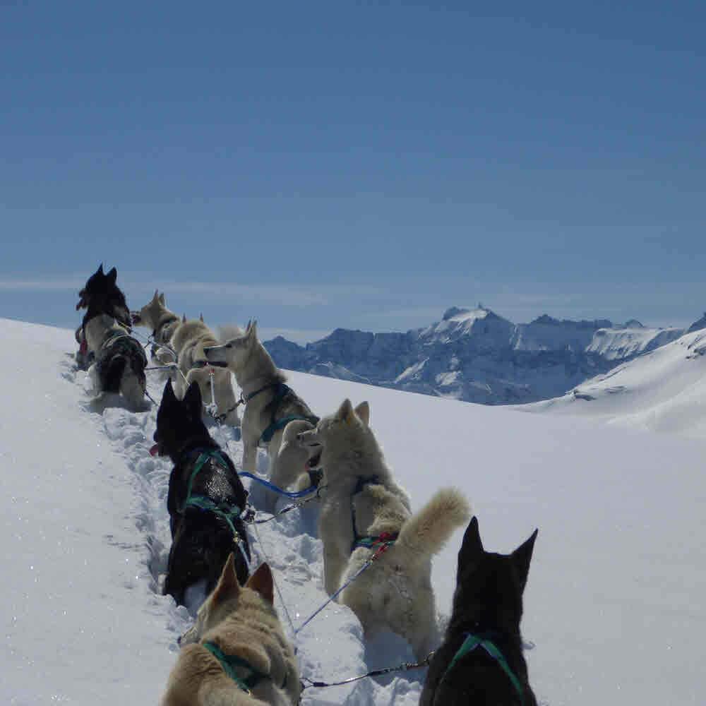 Vorschaubild zu Huskystuff - Schlittenhunde Touren in der Ostschweiz/GR