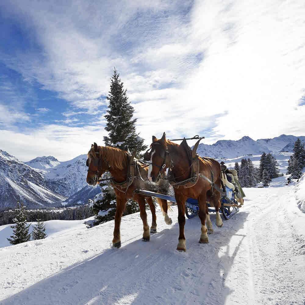 Pferdeschlittenfahrt Arosa