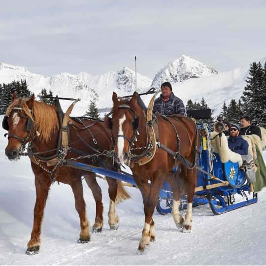 Vorschaubild zu Pferdeschlittenfahrt Arosa