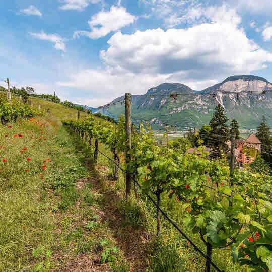 Südtirol - Das Temperament des Südens  10