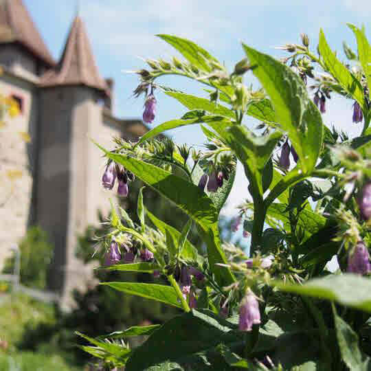 Museum Schloss Kyburg 10