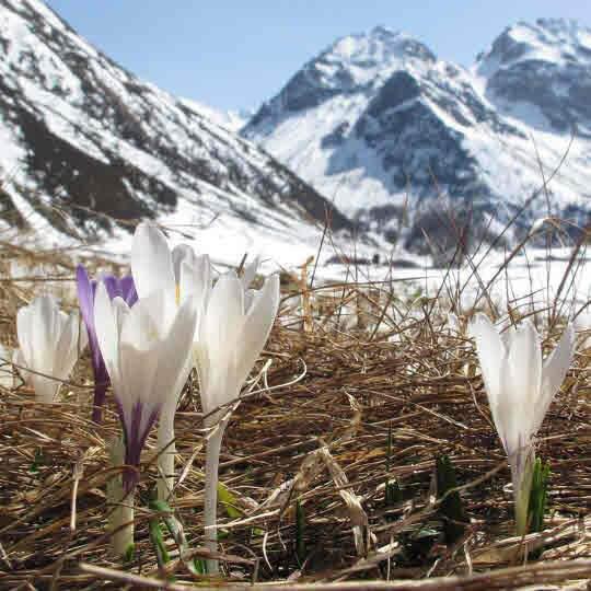 Lenzerheide - Sunstar Alpine Hotel 10