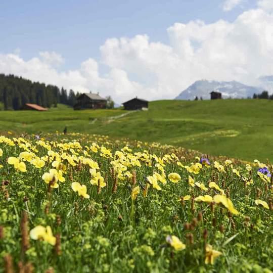 Glücksstein-Trail Arosa 10
