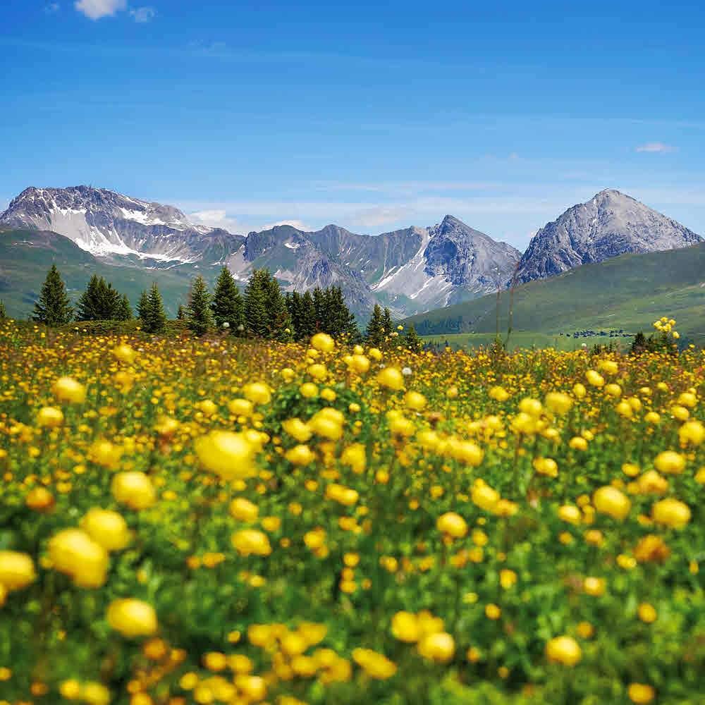 Glücksstein-Trail Arosa
