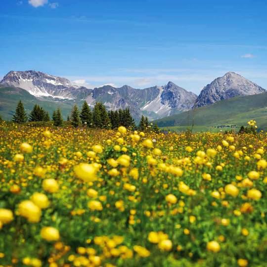 Vorschaubild zu Glücksstein-Trail Arosa