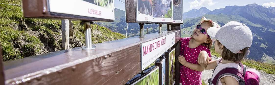 Murmeli-Trail und Luchs-Trail Lenk 1