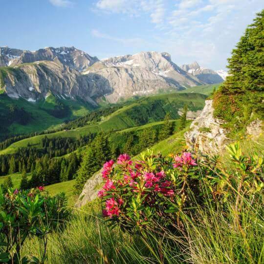 Lenk Bergbahnen im Sommer 10