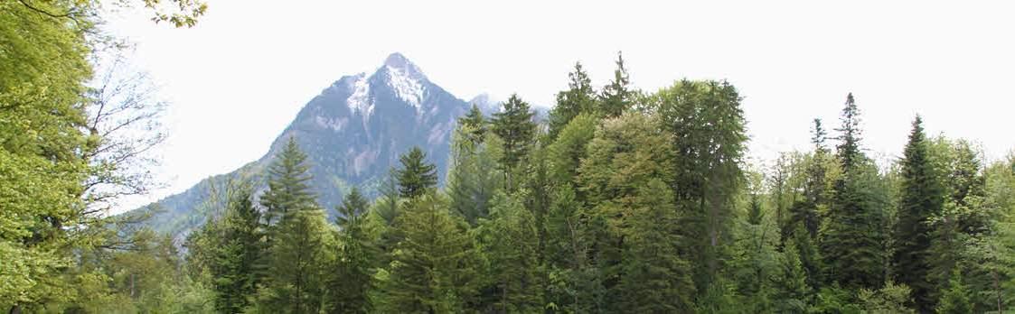 Erlebnisparcours Chärwaldräuber im Kernwald 1