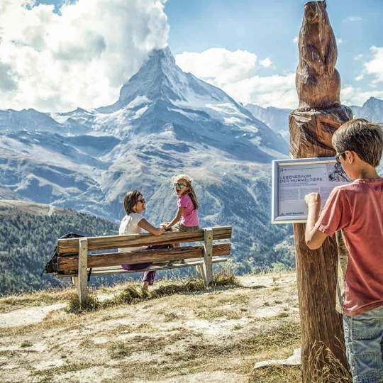 Vorschaubild zu Murmelweg Zermatt
