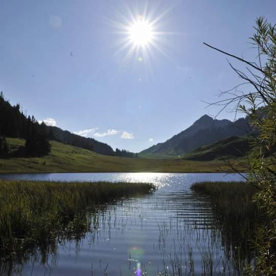 Vorschaubild zu Gräppelensee Toggenburg
