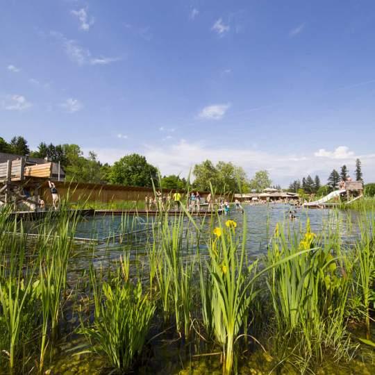 Naturbad Riehen 10