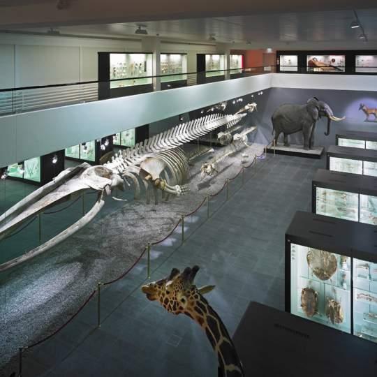 Naturhistorisches Museum der Burgergemeinde Bern 10