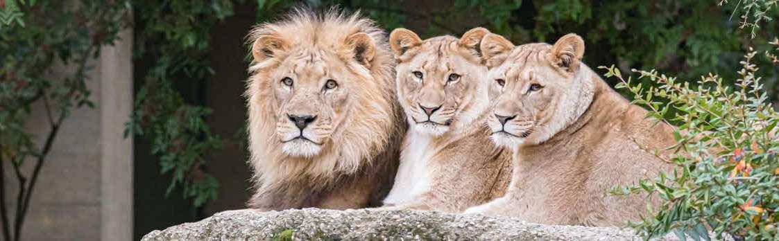 Zoo Basel - über die Landesgrenzen hinaus bekannt 1