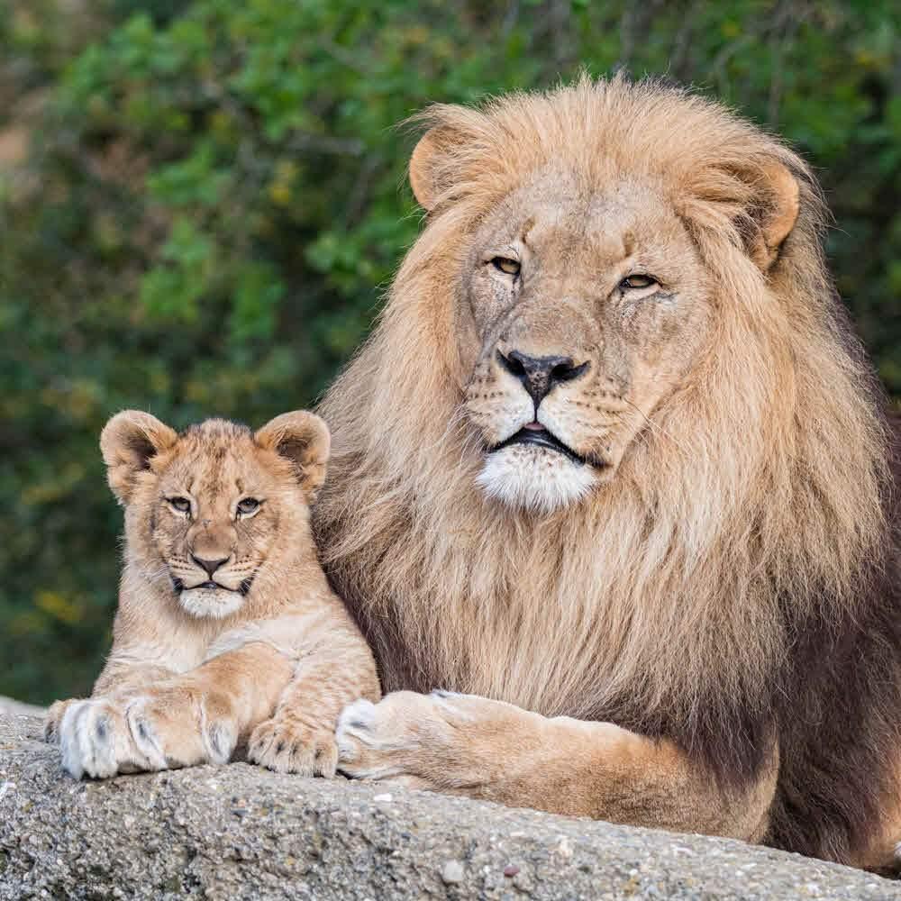 Zoo Basel - über die Landesgrenzen hinaus bekannt