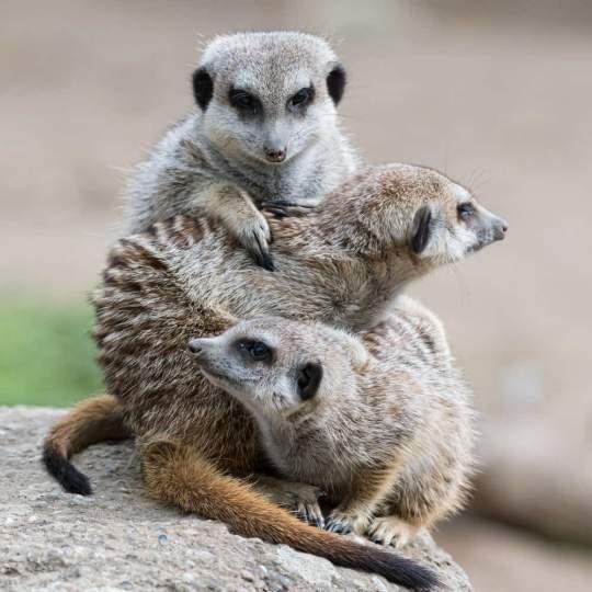 Zoo Basel - über die Landesgrenzen hinaus bekannt 10