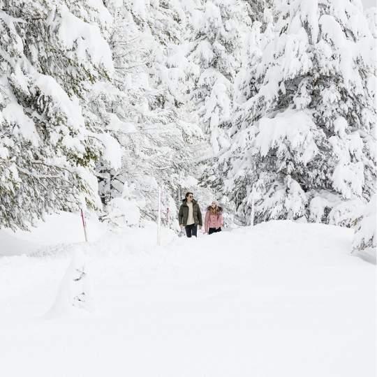 Vorschaubild zu Engadin - Winterwandern