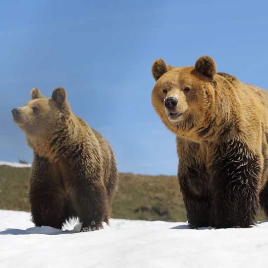 Das Arosa Bärenland 10