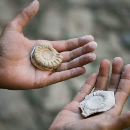 Fossilienmuseum des Monte San Giorgio in Meride 10