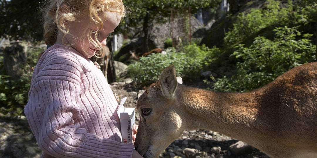 Ein tierischer Besuch - Natur- und Tierpark Goldau