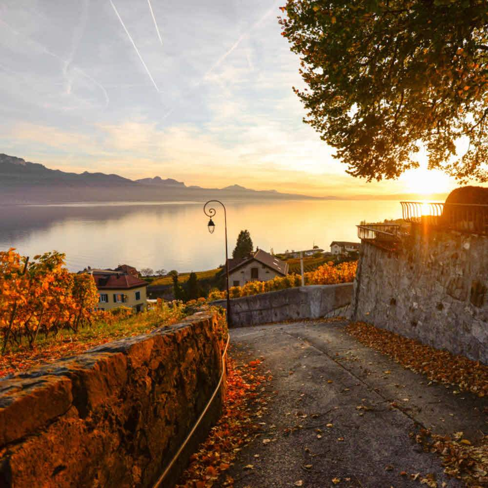 Lavaux - UNESCO Kulturlandschaft