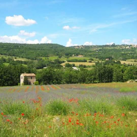 Vorschaubild zu Radreisen durch die Provence und die Camargue